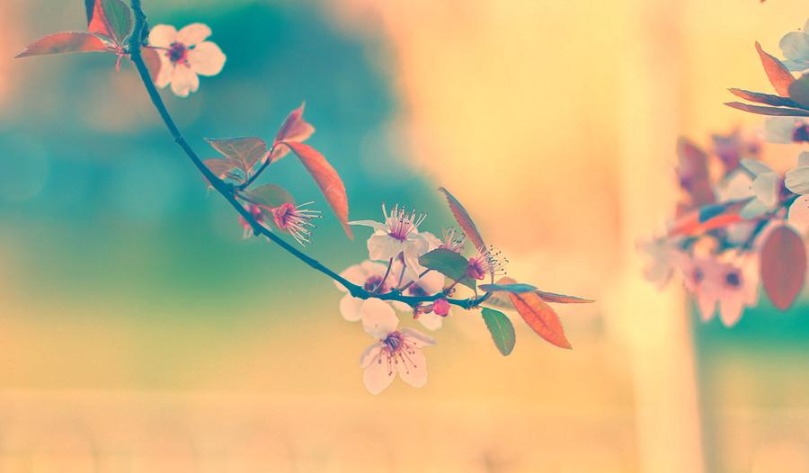 foto_ARENA_4.4